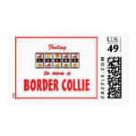 Lucky to Own a Border Collie Fun Dog Design Postage Stamp
