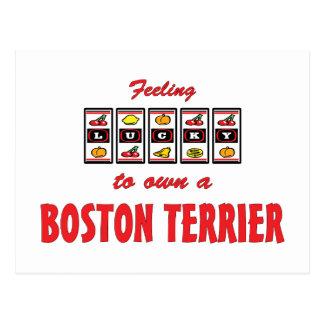 Lucky to Own a Boston Terrier Fun Dog Design Postcard