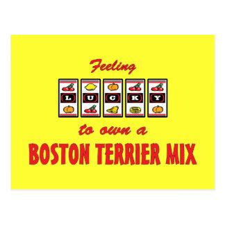 Lucky to Own a Boston Terrier Mix Fun Dog Design Postcard