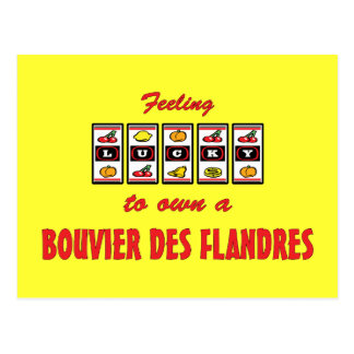 Lucky to Own a Bouvier des Flandres Fun Dog Design Postcard