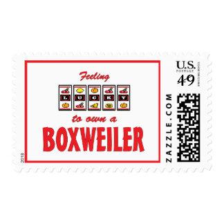 Lucky to Own a Boxweiler Fun Dog Design Postage