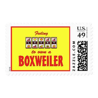 Lucky to Own a Boxweiler Fun Dog Design Stamps