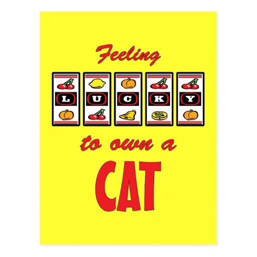 Lucky to Own a Cat Fun Cat Design Post Cards