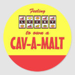 Lucky to Own a Cav-A-Malt Fun Dog Design Classic Round Sticker