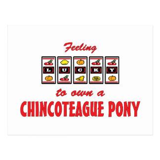 Lucky to Own a Chincoteague Pony Fun Design Postcard