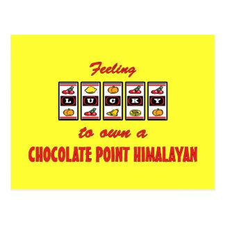 Lucky to Own a Chocolate Point Himalayan Fun Cat D Postcard