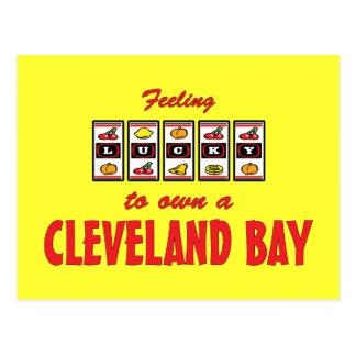 Lucky to Own a Cleveland Bay Fun Horse Design Postcard