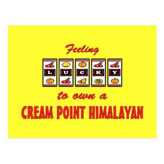 Lucky to Own a Cream Point Himalayan Fun Cat Desig Postcard
