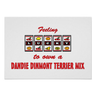 Lucky to Own a Dandie Dinmont Terrier Mix Posters