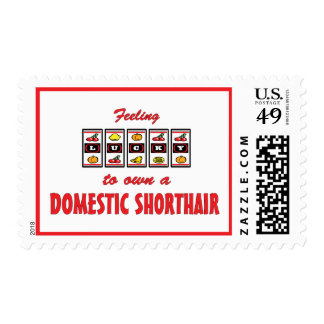 Lucky to Own a Domestic Shorthair Fun Cat Design Postage Stamp