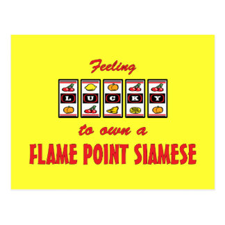 Lucky to Own a Flame Point Siamese Fun Cat Design Postcard