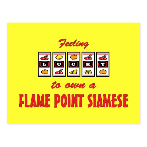 Lucky to Own a Flame Point Siamese Fun Cat Design Postcards