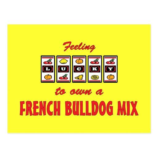 Lucky to Own a French Bulldog Mix Fun Dog Design Postcard