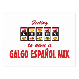 Lucky to Own a Galgo Español Mix Fun Dog Design Postcard