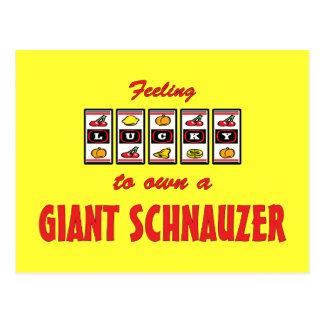 Lucky to Own a Giant Schnauzer Fun Dog Design Postcard