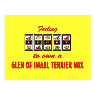 Lucky to Own a Glen of Imaal Terrier Mix Postcard