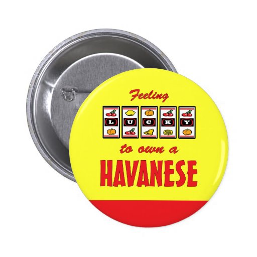 Lucky to Own a Havanese Fun Dog Design Pins