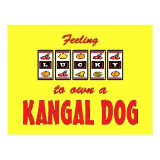 Lucky to Own a Kangal Dog Fun Dog Design Postcard