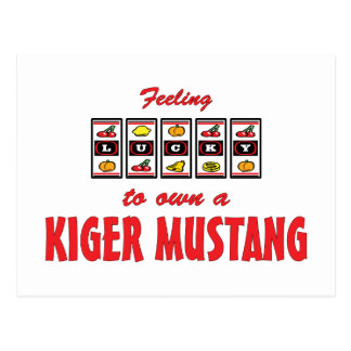 Lucky to Own a Kiger Mustang Fun Horse Design Postcard