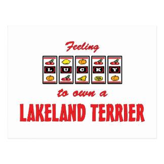 Lucky to Own a Lakeland Terrier Fun Dog Design Postcard