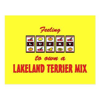 Lucky to Own a Lakeland Terrier Mix Fun Dog Design Postcard
