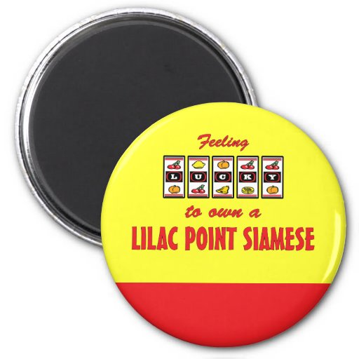 Lucky to Own a Lilac Point Siamese Fun Cat Design 2 Inch Round Magnet