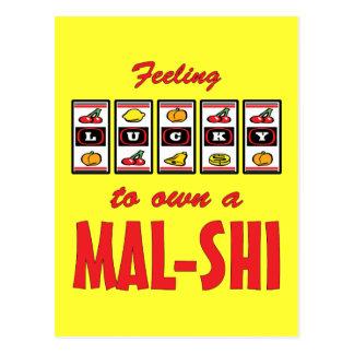 Lucky to Own a Mal-Shi Fun Dog Design Postcard