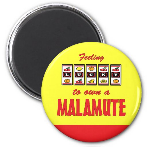 Lucky to Own a Malamute Fun Dog Design 2 Inch Round Magnet