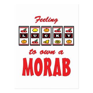 Lucky to Own a Morab Fun Horse Design Postcard