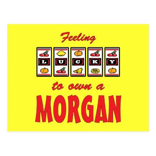 Lucky to Own a Morgan Fun Horse Design Post Card