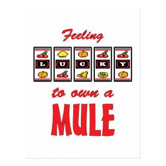 Lucky to Own a Mule Fun Design Postcard