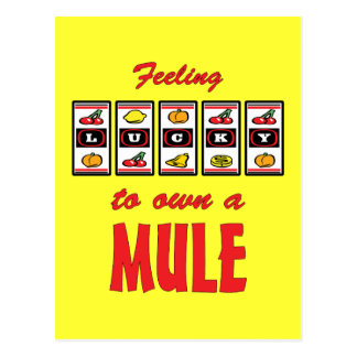 Lucky to Own a Mule Fun Design Postcard