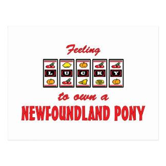 Lucky to Own a Newfoundland Pony Fun Design Postcard
