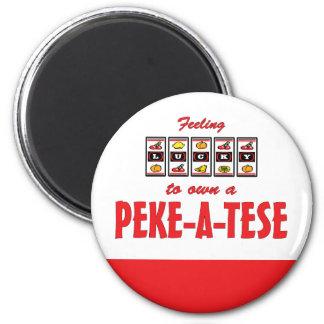 Lucky to Own a Peke-A-Tese Fun Dog Design Magnet