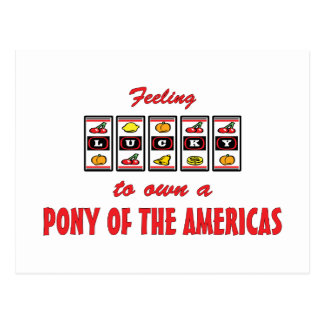 Lucky to Own a Pony of the Americas Fun Design Postcard