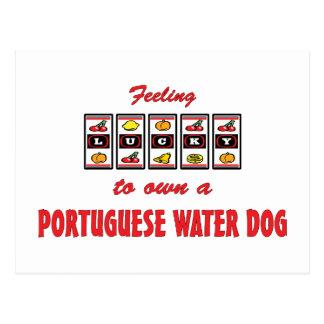 Lucky to Own a Portuguese Water Dog Fun Dog Design Postcard
