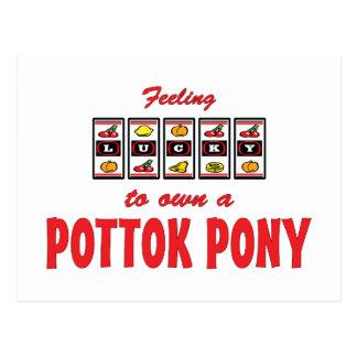 Lucky to Own a Pottok Pony Fun Design Postcard