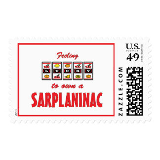 Lucky to Own a Sarplaninac Fun Dog Design Postage Stamps