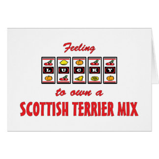 Lucky to Own a Scottish Terrier Mix Fun Dog Design Card