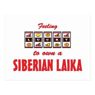 Lucky to Own a Siberian Laika Fun Dog Design Postcard