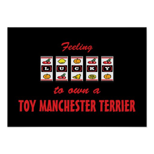 Lucky to Own a Toy Manchester Terrier Fun Design Posters