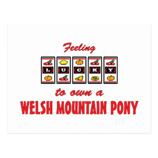 Lucky to Own a Welsh Mountain Pony Fun Design Postcard