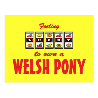 Lucky to Own a Welsh Pony Fun Design Postcard