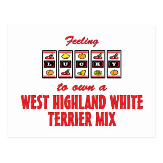 Lucky to Own a West Highland White Terrier Mix Postcard