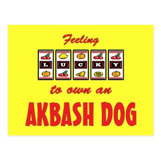 Lucky to Own an Akbash Dog Fun Dog Design Postcard