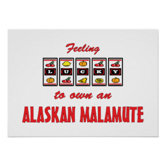 Lucky to Own an Alaskan Malamute Fun Dog Design Poster