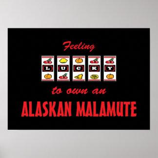 Lucky to Own an Alaskan Malamute Fun Dog Design Posters