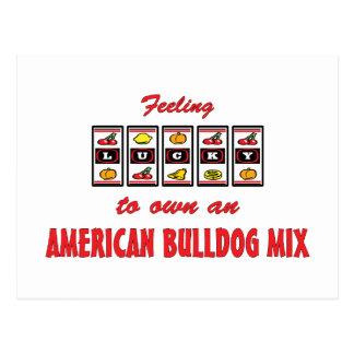 Lucky to Own an American Bulldog Mix Fun Design Postcard