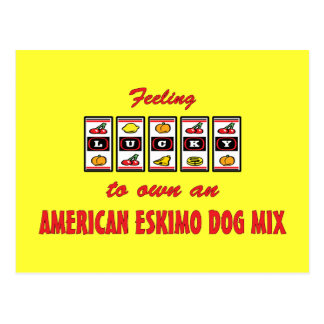 Lucky to Own an American Eskimo Dog Mix Fun Design Postcard