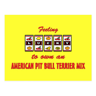 Lucky to Own an American Pit Bull Terrier Mix Postcard